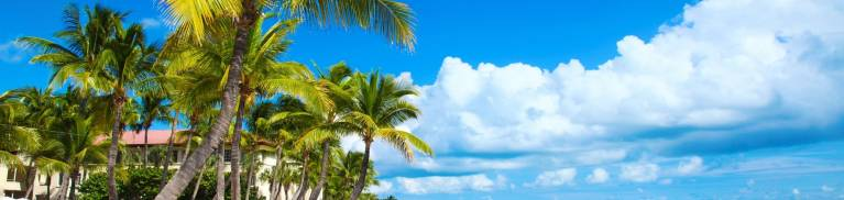 Key West Beach and Palm Trees